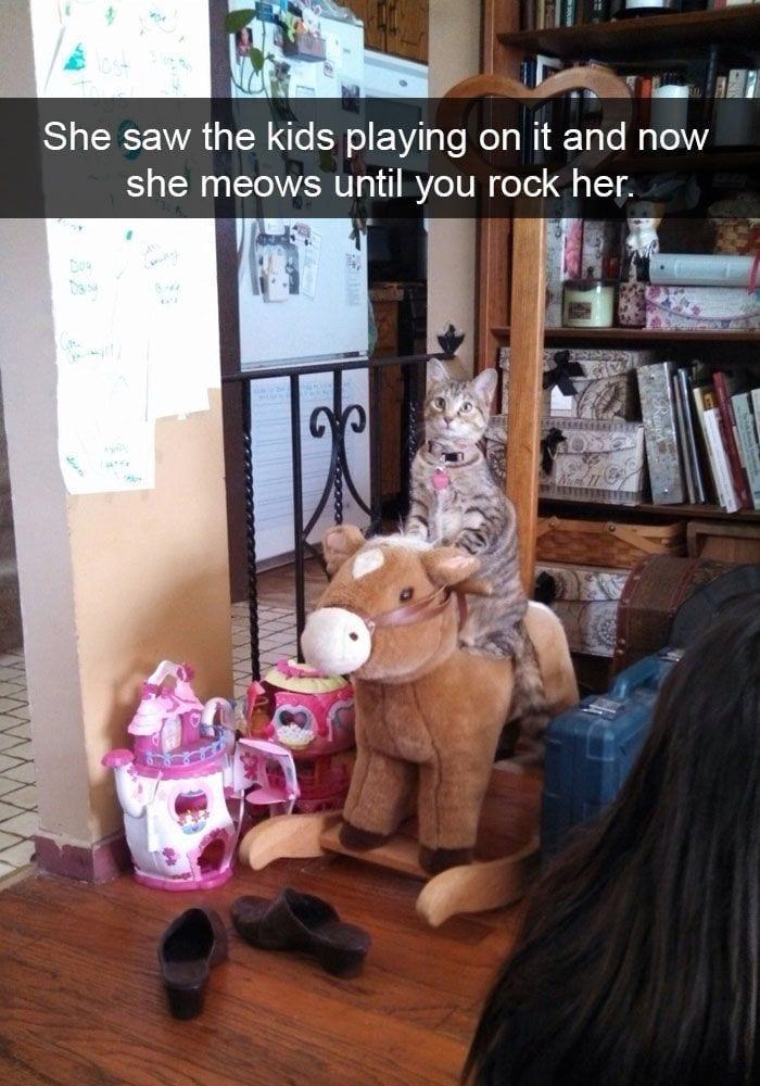 gatos-curiosos5