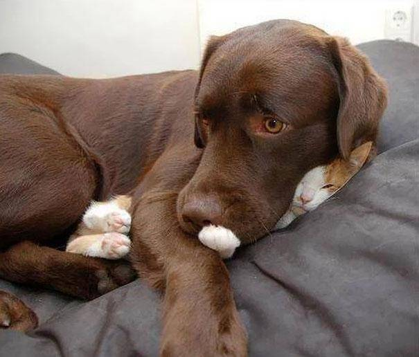 gatos-dormir-sitios-raros1