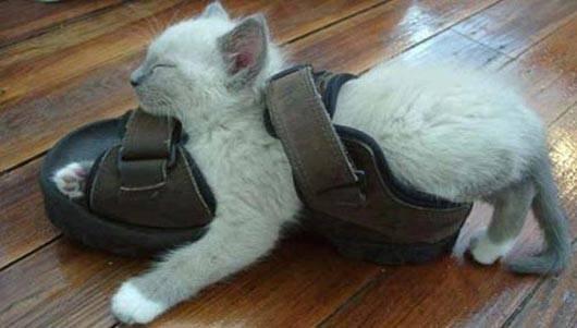 gatos-dormir-sitios-raros10