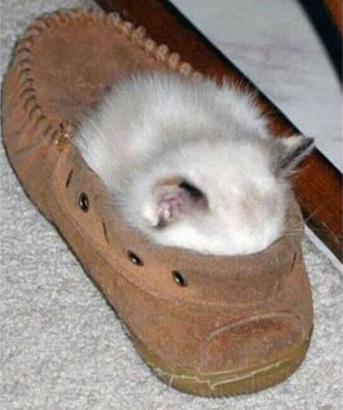 gatos-dormir-sitios-raros11