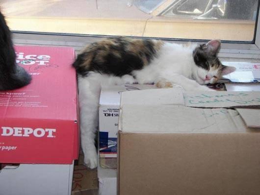 gatos-dormir-sitios-raros12