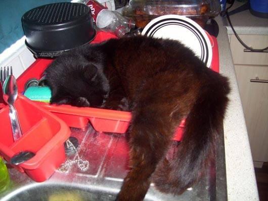 gatos-dormir-sitios-raros14
