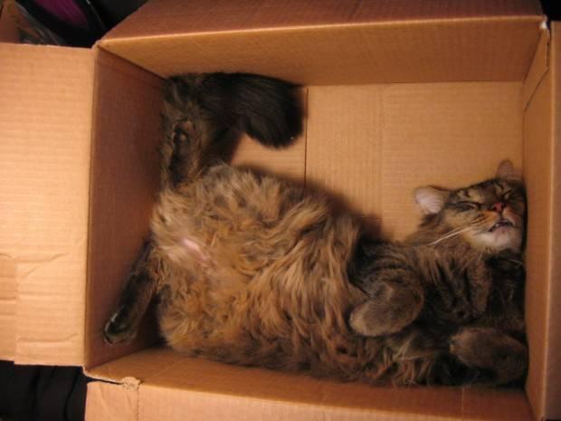 gatos-dormir-sitios-raros18