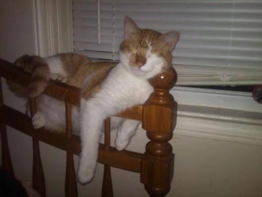 gatos-dormir-sitios-raros19
