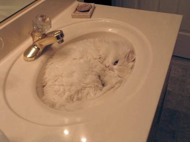 gatos-dormir-sitios-raros25