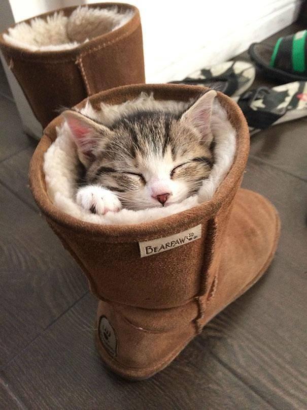 gatos-dormir-sitios-raros27