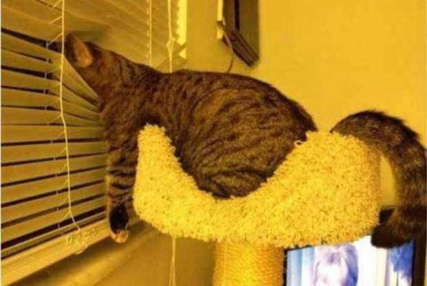 gatos-dormir-sitios-raros29