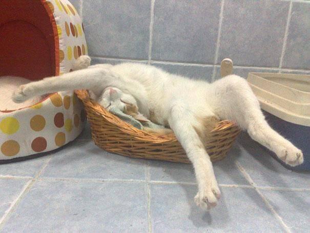 gatos-dormir-sitios-raros4