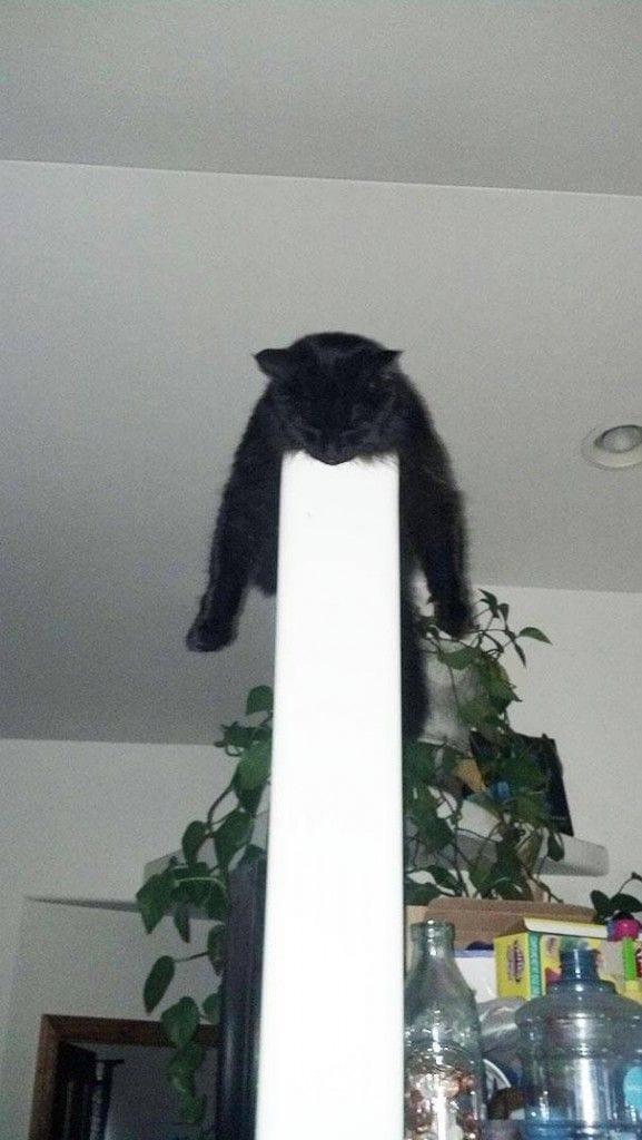gatos-dormir-sitios-raros5