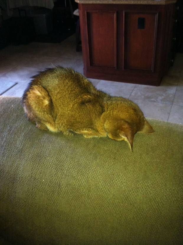 gatos-dormir-sitios-raros6