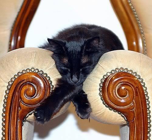 gatos-dormir-sitios-raros7