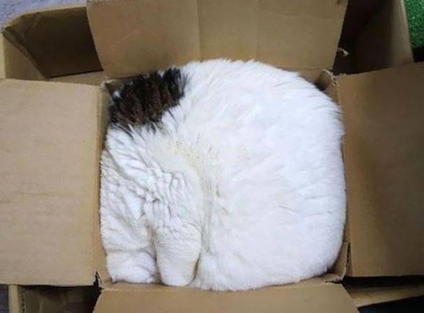 gatos-dormir-sitios-raros8