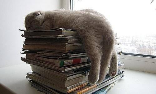 gatos-dormir-sitios-raros9
