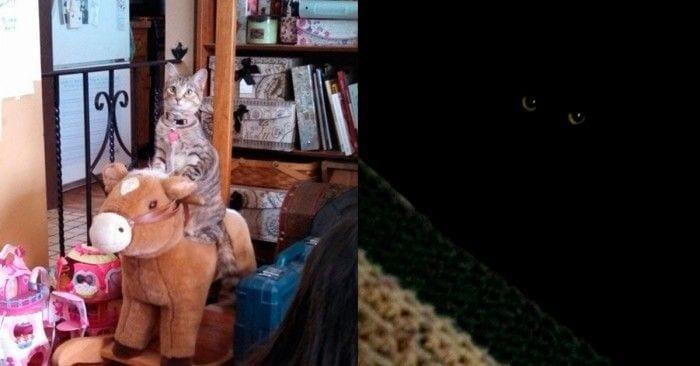 gatos especiales mascotas