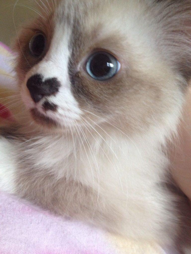 gatos-pelaje-precioso1