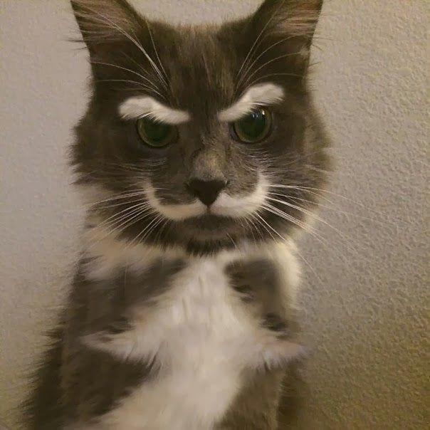 gatos-pelaje-precioso10