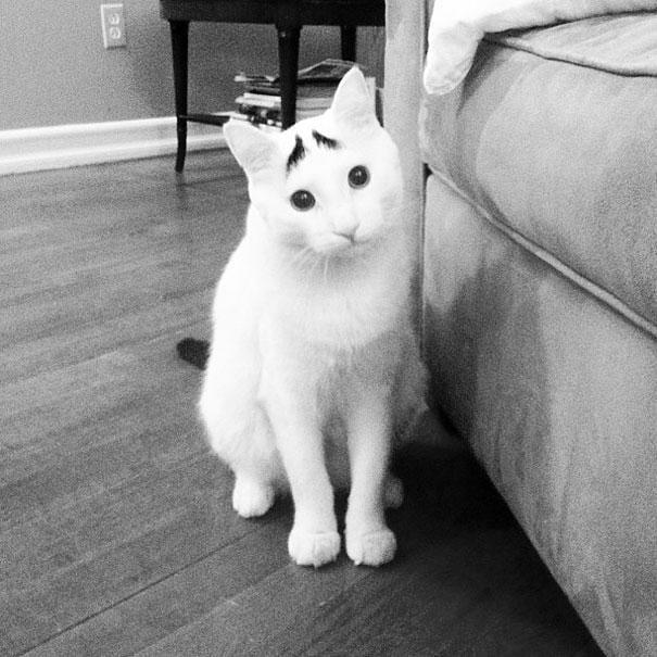 gatos-pelaje-precioso13
