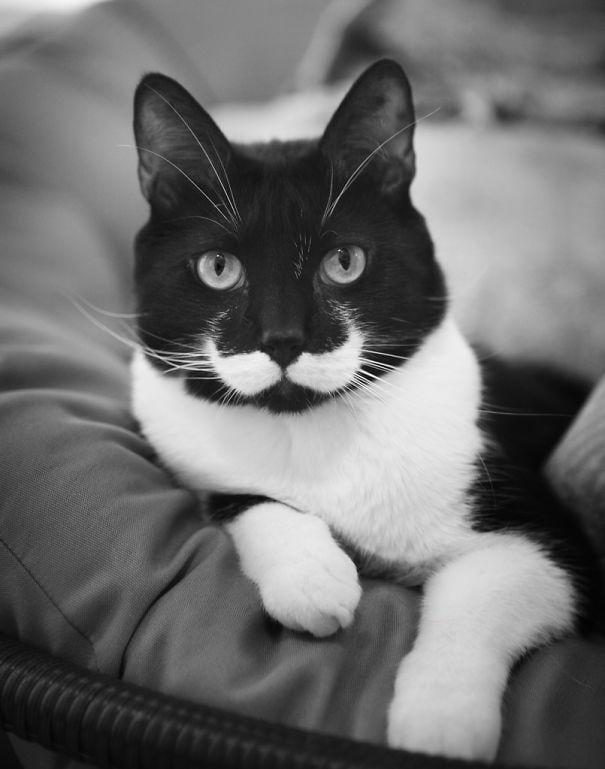 gatos-pelaje-precioso15