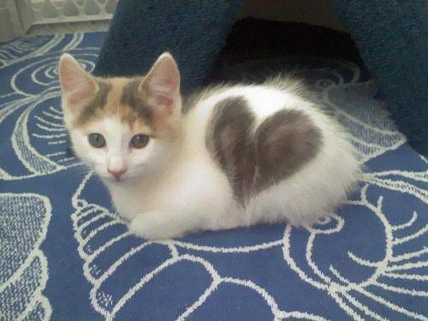 gatos-pelaje-precioso2