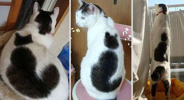 gatos pelaje precioso20