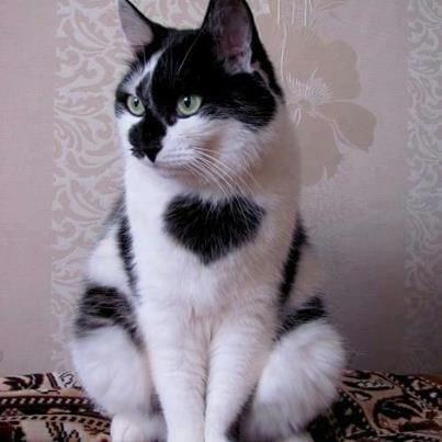 gatos-pelaje-precioso22