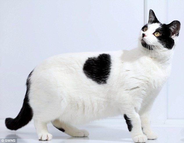 gatos-pelaje-precioso3