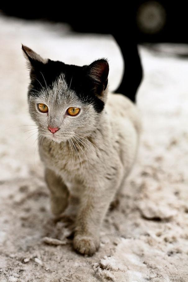 gatos-pelaje-precioso6
