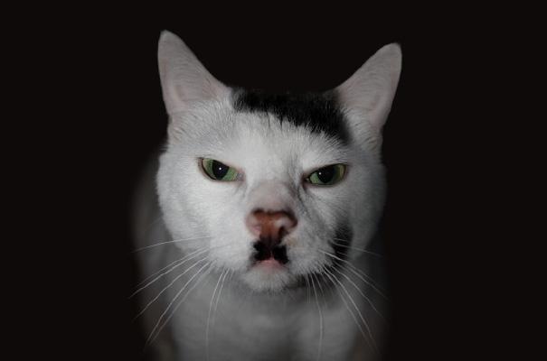 gatos-pelaje-precioso7