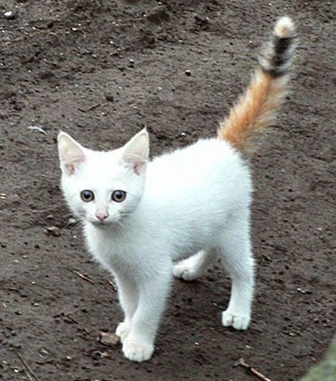 gatos-pelaje-precioso9