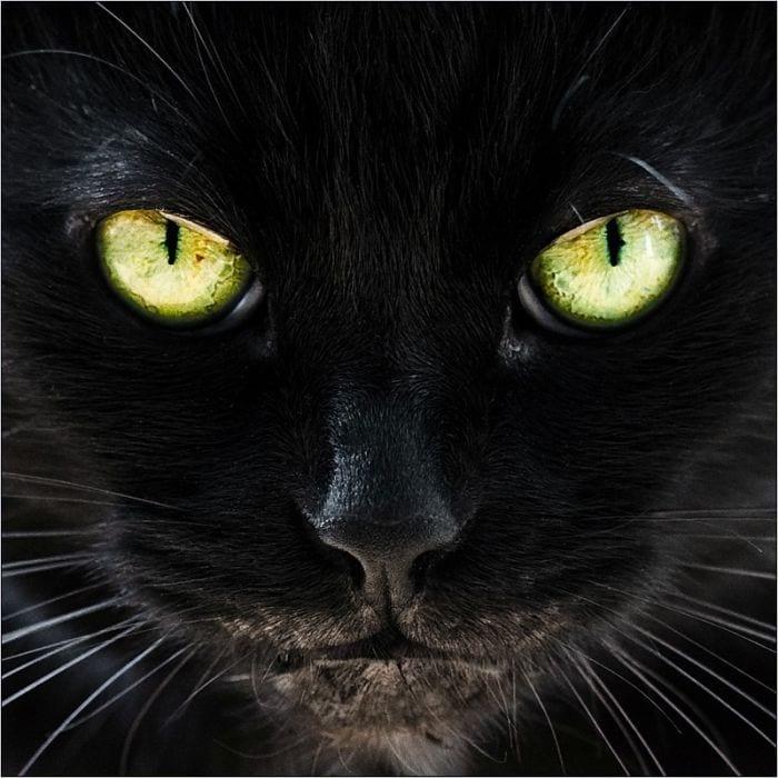 gatos_13