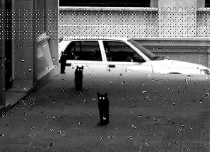 gatos_14