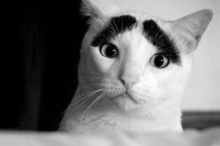 gatos_20