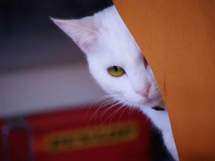 gatos_4