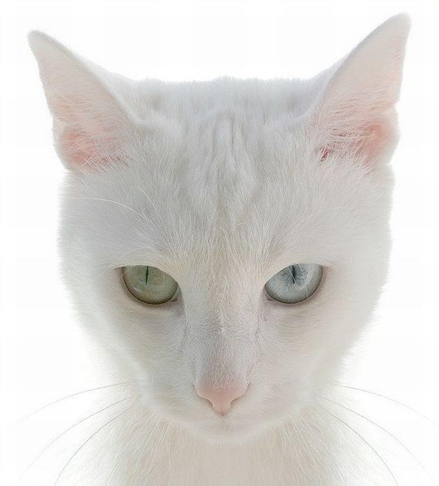 gatos_5