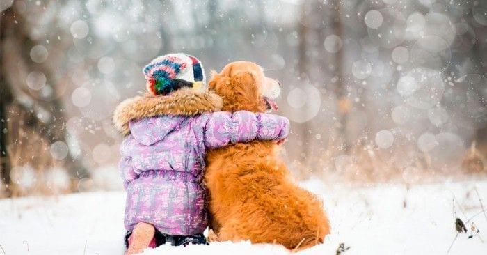 invierno perros dest