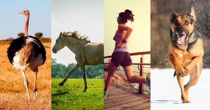 maraton animales