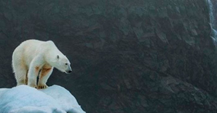 oso cambio climatico