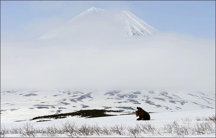 osos-siberia11