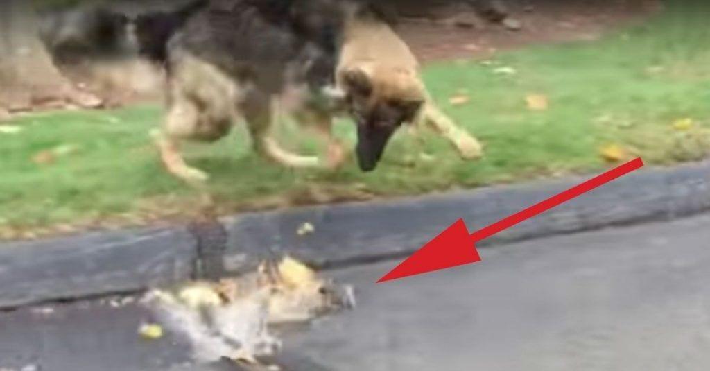 perro detiene agua