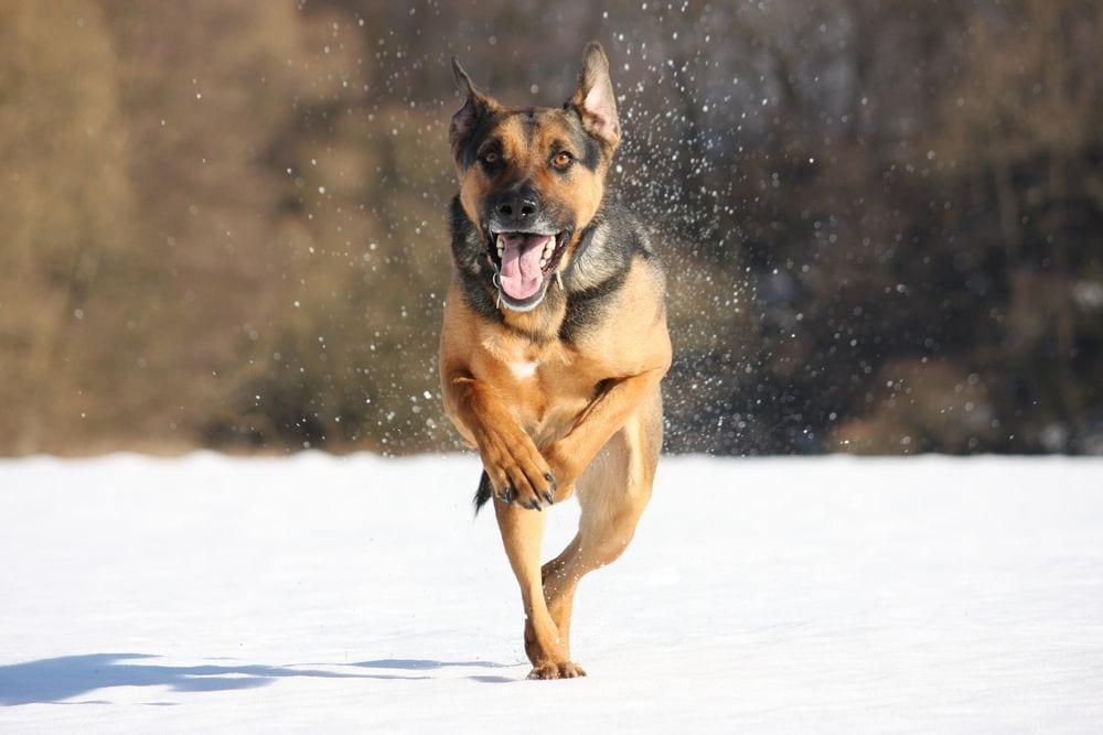 perro-maraton