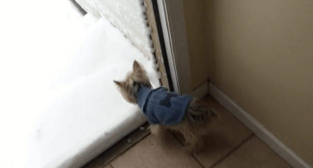 perro-nieve-primera-vez