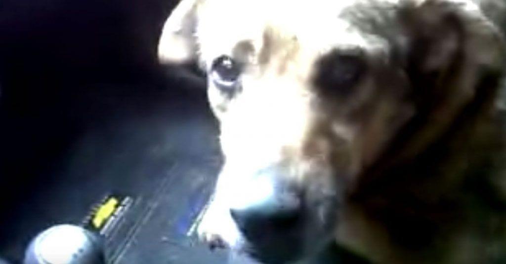 perro perdido hablando