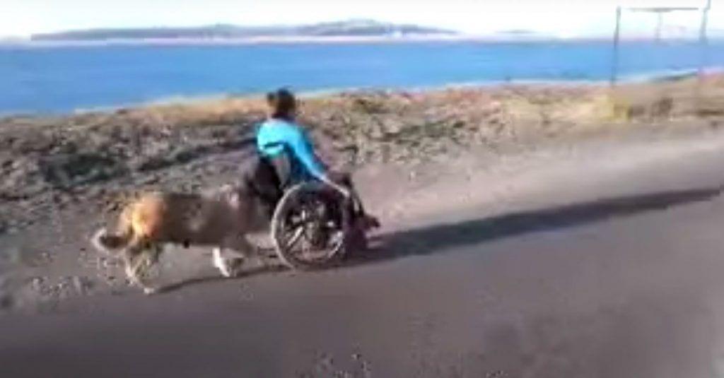 perro-silla-ruedas