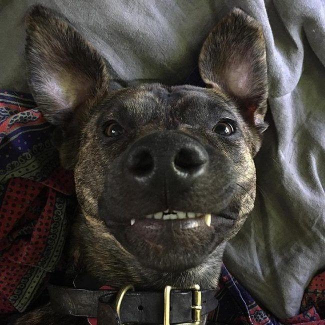 perros-recien-levantados12