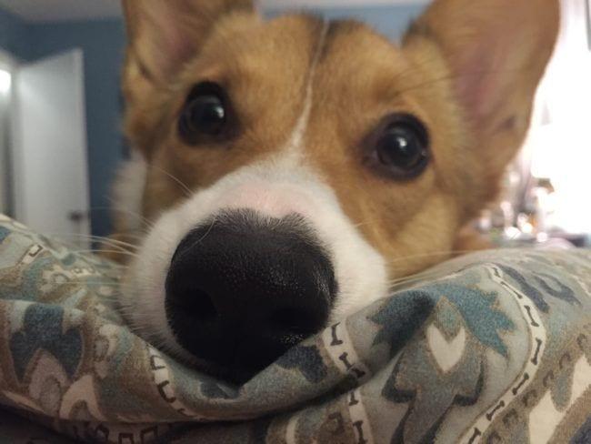 perros-recien-levantados7