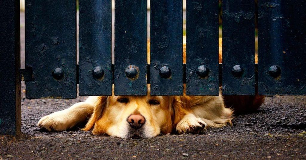 perros ventanas vallas