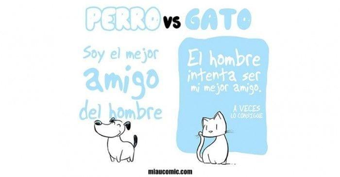 perros vs gatos destacada