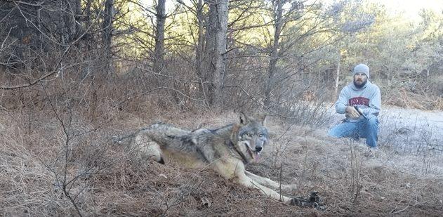 rescate-lobo2