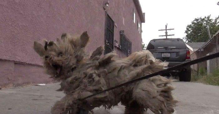 rescate perro enmaranado