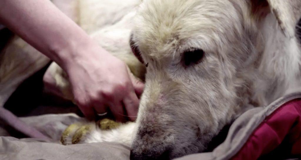 rescate-perro-milagro1